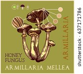 honey fungus in engraved style. ... | Shutterstock .eps vector #637171786