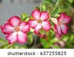 pink flower | Shutterstock . vector #637255825