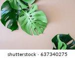 monstera leaves template ... | Shutterstock . vector #637340275