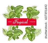 tropical palm branches... | Shutterstock .eps vector #637351642
