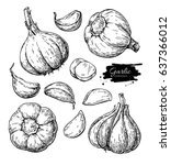 garlic hand drawn vector... | Shutterstock .eps vector #637366012