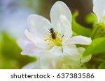 blooming apple tree | Shutterstock . vector #637383586