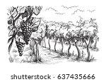 rows of vineyard grape plants... | Shutterstock .eps vector #637435666