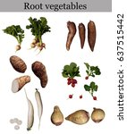 Small photo of root vegetables isolated