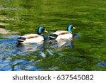 couple of dragon mallard ducks... | Shutterstock . vector #637545082