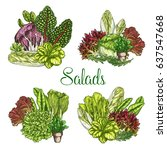 salads and lettuces bunches.... | Shutterstock .eps vector #637547668