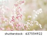 grass flowers in vintage style... | Shutterstock . vector #637554922