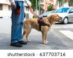 guide dog is helping a blind... | Shutterstock . vector #637703716