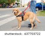 Stock photo guide dog is helping a blind man in the city 637703722