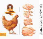 fresh chicken meat. top view.... | Shutterstock .eps vector #637723105