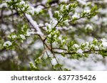 anomalous spring in belarus ... | Shutterstock . vector #637735426