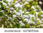 abnormal spring  the snow on... | Shutterstock . vector #637805566