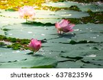 lotus flower | Shutterstock . vector #637823596