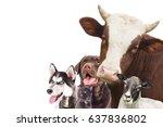Stock photo group of animals on white background 637836802