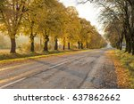 Road And Autumn Trees In Sun...