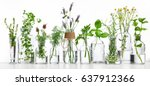bottle of essential oil with... | Shutterstock . vector #637912366