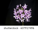 beautiful orchid show flower in ... | Shutterstock . vector #637917496