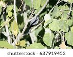 Small photo of African Gray Flycatcher (Bradornis microrhynchus) Perched in a Tree in Northern Tanzania