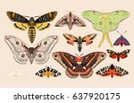 Set Of Moths And Butterflies