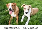 Small photo of Young Dogs Outside Relaxin on Green Grass