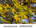 colorful autumn leaves | Shutterstock . vector #638063482