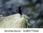 Small photo of Black dragonfly adhere on stone beside the river.