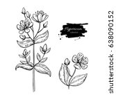 st. john's wort vector drawing... | Shutterstock .eps vector #638090152
