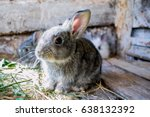 Stock photo  rabbit in the cage rabbit small rabbit small bunny 638132392