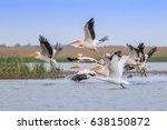 white pelicans  pelecanus... | Shutterstock . vector #638150872