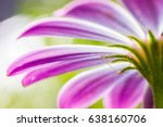 macro flower petal. abstract... | Shutterstock . vector #638160706