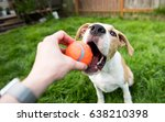 Stock photo young dog playing with orange ball toy 638210398