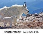 mother and baby mountain goats... | Shutterstock . vector #638228146