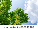 the silhouette of tree stands... | Shutterstock . vector #638242102