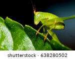 This Is A Photo Of A Katydid...