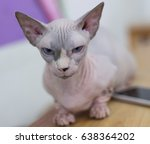 kitty cat  sphynx and munchkin... | Shutterstock . vector #638364202