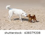 dogs playing and splashing in... | Shutterstock . vector #638379208