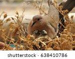 Bird In Nest 2
