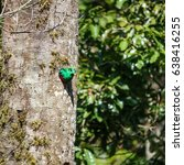 side view of male quetzal... | Shutterstock . vector #638416255