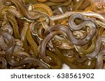 Small photo of many snakes on each other tangled, half in the water, for sale