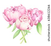 watercolor peonies centerpiece... | Shutterstock . vector #638612266