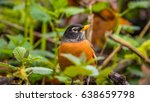 Beautiful Brown Bird With An...