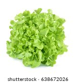 oak leaf lettuce isolated on... | Shutterstock . vector #638672026