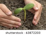 sprout in child hand   Shutterstock . vector #63872203