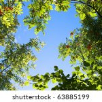 Trees Branches On Blue Sky