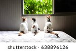 Small photo of Three Cats