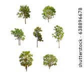 Isolated Trees Collection White Background - Fine Art prints