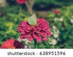 butterfly on flower | Shutterstock . vector #638951596