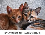 Stock photo kitten 638995876