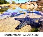 starfish | Shutterstock . vector #639016282