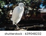 white bird | Shutterstock . vector #639048232